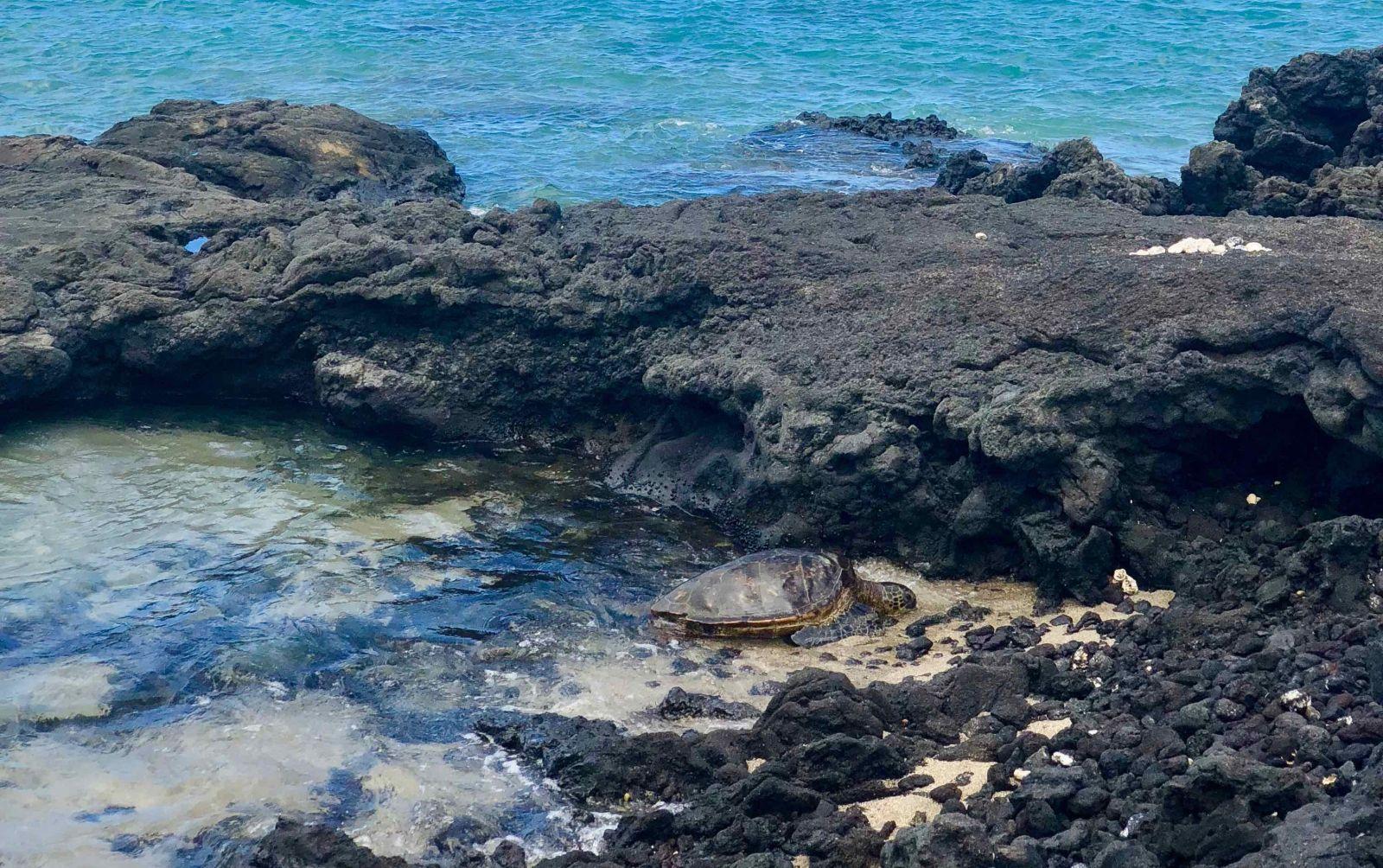 Where to Find Sea Turtles on the Big Island of Hawaii | Big